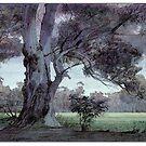 Parklands gum by David  Kennett
