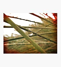 Dew Drop Photographic Print
