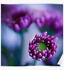 Colour Of Life XXXIV [Print & iPad Case] Poster