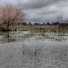 Winter - Lake Wendouree by Barbara  Glover