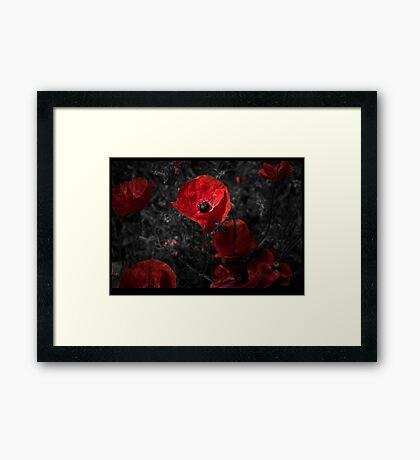 Red red poppy Framed Print
