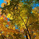 Canopy of Color by Brian Gaynor