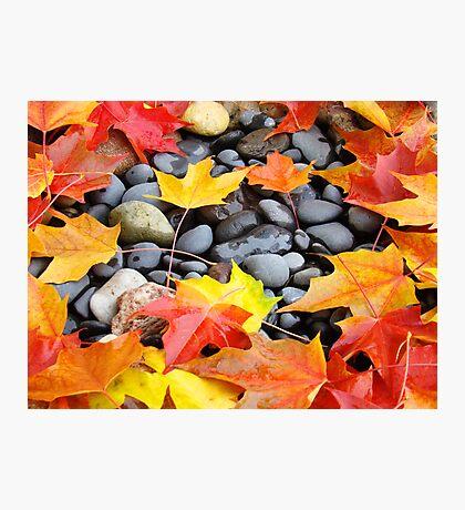 Fall Art prints Colorful Autumn Leaves Rocks Photographic Print