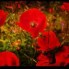 Poppies by Beverly Cash