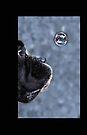 It's A Bubble iPhone von Evita