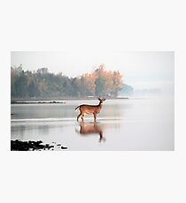 Buck - Ottawa River Photographic Print