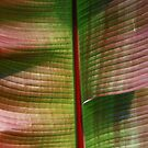 Leaves by Michael  Herrfurth