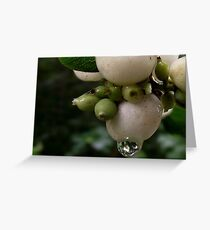 Common Snowberry Greeting Card
