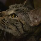 Another shot of Gaia, my tabby furbaby by SusanHope