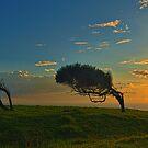 Windswept Trees - Norfolk Island by Greg Earl
