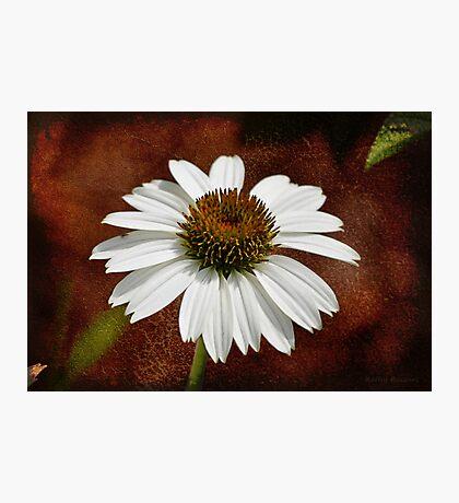 Single Cone Flower - Textures Photographic Print
