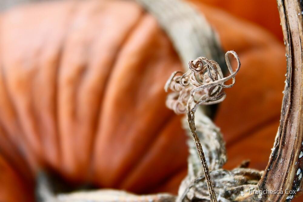 Pumpkin Love 1 by Franchesca Cox
