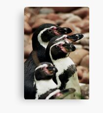 Penguins Canvas Print