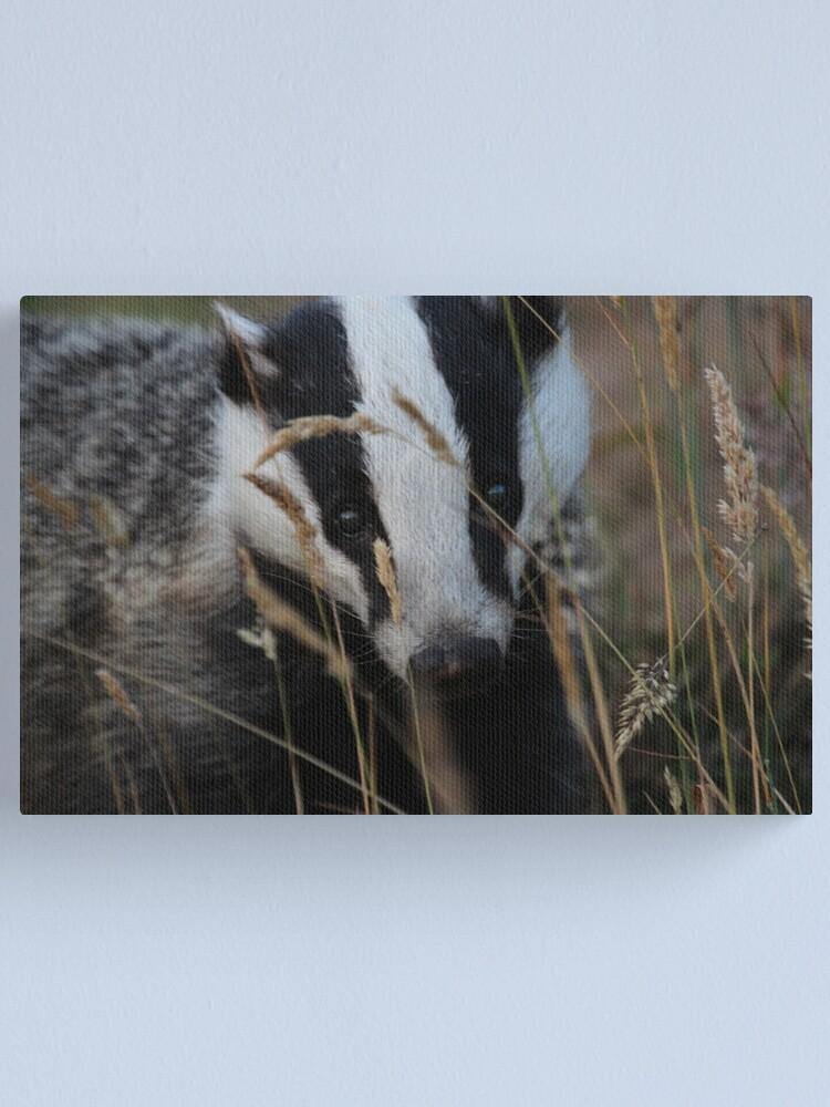 Alternate view of Badger hide and seek Canvas Print