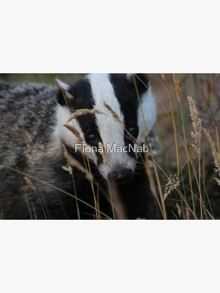 Badger hide and seek by orcadia