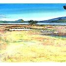 Swamp harrier by melhillswildart