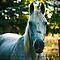 Just Grey Horses ......