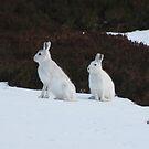 Winter coats by Fiona MacNab