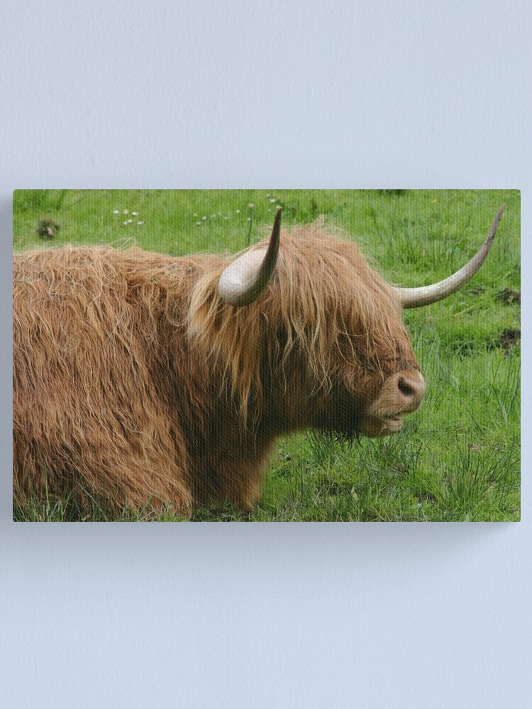 Alternate view of Chewing the cud Canvas Print