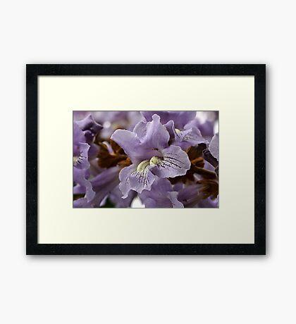 Sapphire Dragon Framed Print