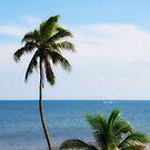 Tropical Daydream by PJS15204