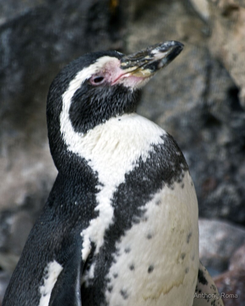Posing Penguin Profile by Anthony Roma