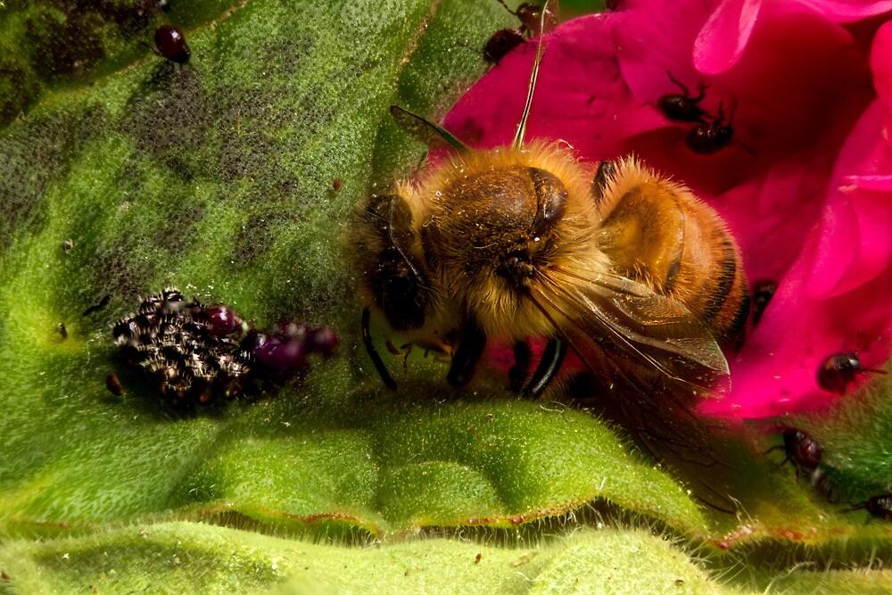 Studio Shot: Bee & Shield Bugs (nymph) by Colin  Ewington