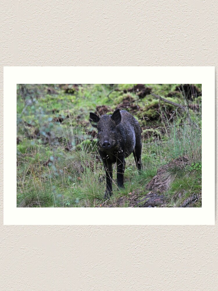 Alternate view of Wild boar Art Print