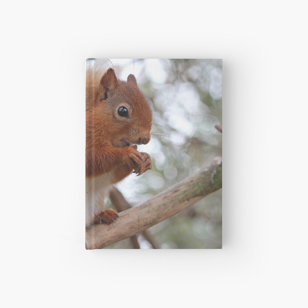 Red squirrel Hardcover Journal