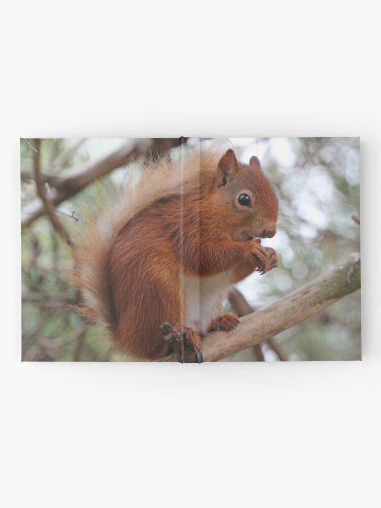 Alternate view of Red squirrel Hardcover Journal