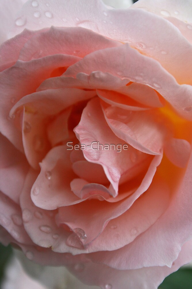Raindrops on Roses #11 by Sea-Change