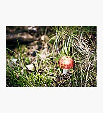 Bright red mushrooms.. tempted Photographic Print