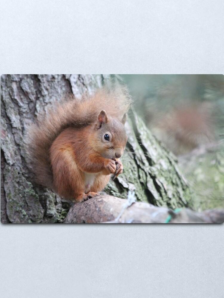 Alternate view of Red squirrel Metal Print
