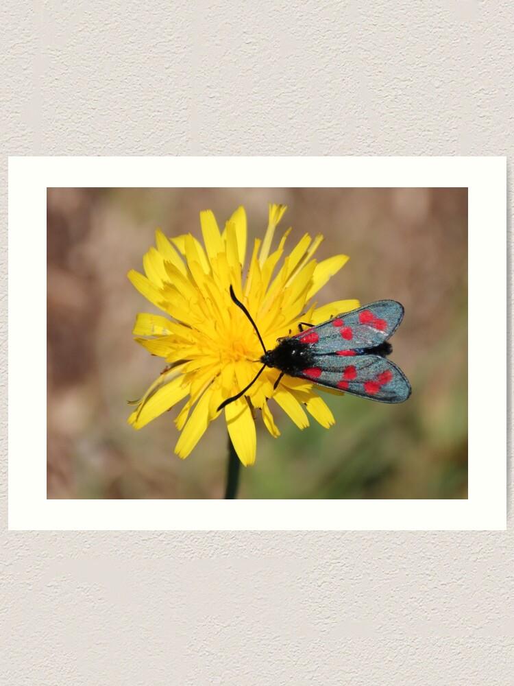 Alternate view of Burnet moth Art Print