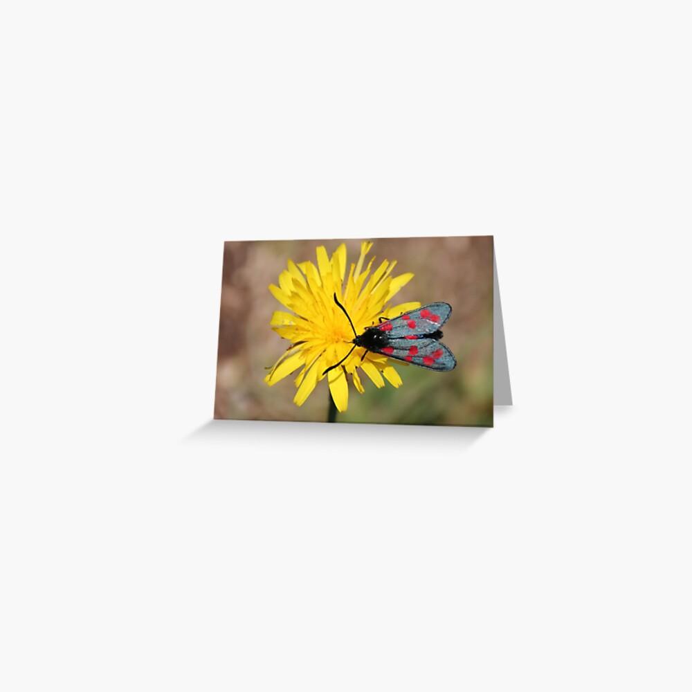 Burnet moth Greeting Card