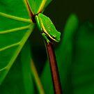 It's Good To Be Green by Brenda Burnett