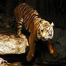 1113 Tiger Tiger by DavidsArt