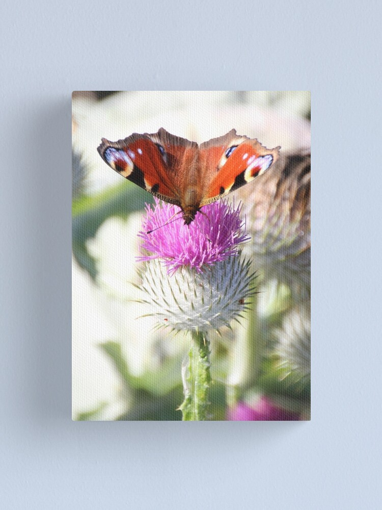 Alternate view of Peacock on thistle Canvas Print