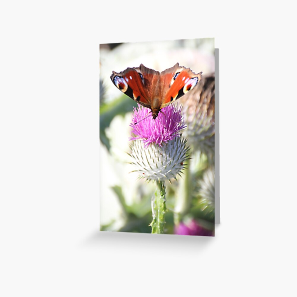 Peacock on thistle Greeting Card