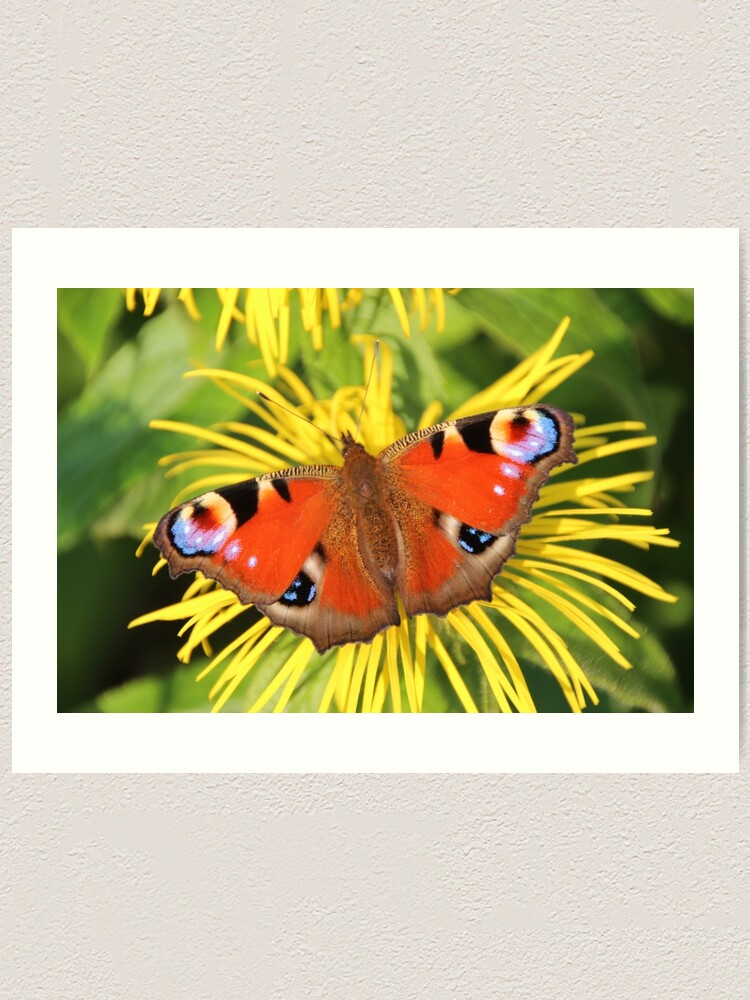 Alternate view of Peacock butterfly Art Print
