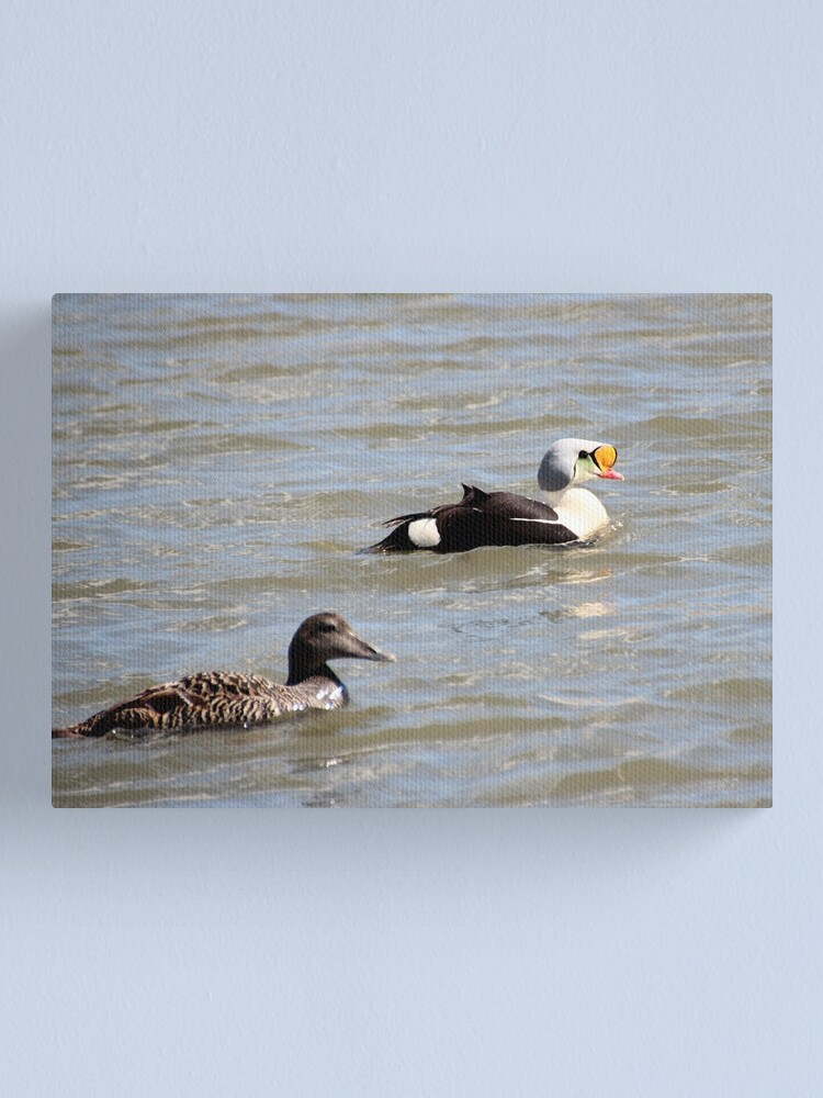 Alternate view of Eiders Canvas Print
