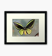 Butterfly Up Close & Personal Framed Print