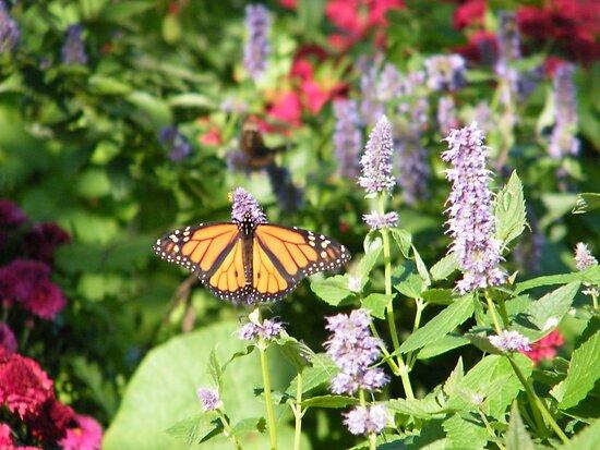 Butterflies, Liberty State Park, New Jersey by lenspiro
