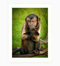 Capuchin Monkey - Edinburgh Zoo Art Print