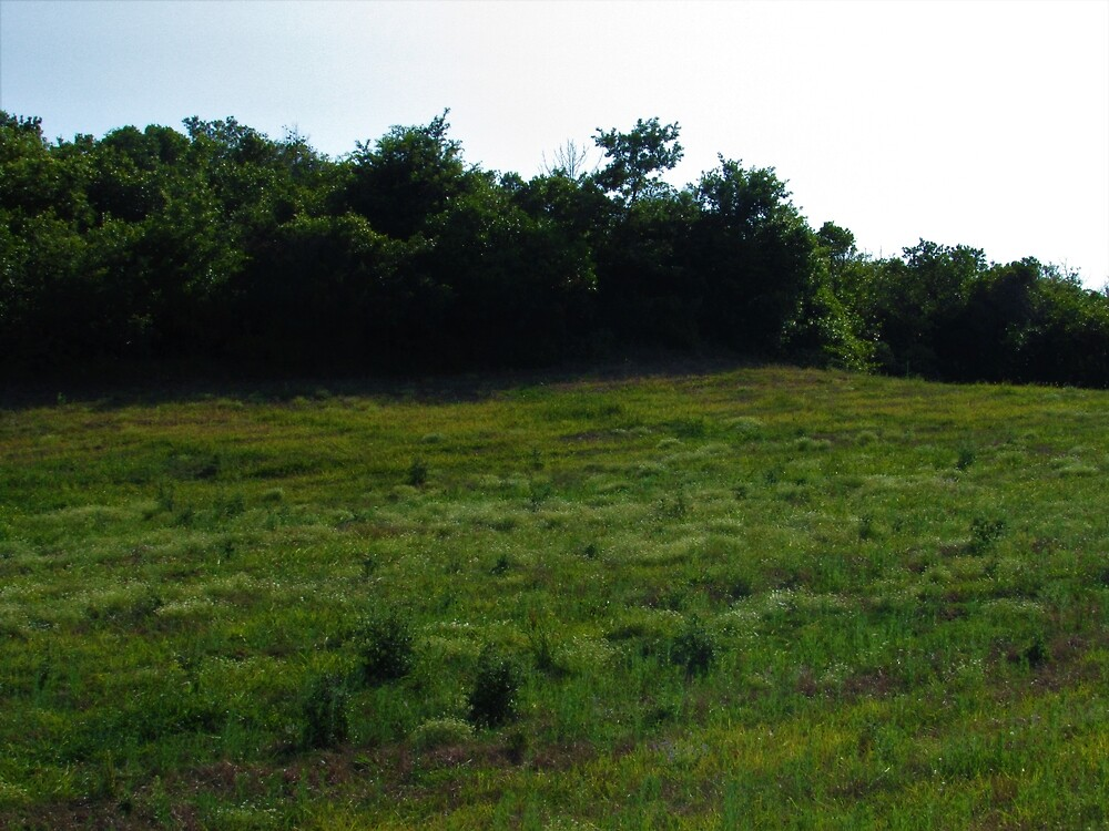 Beautiful Field by tomeoftrovius