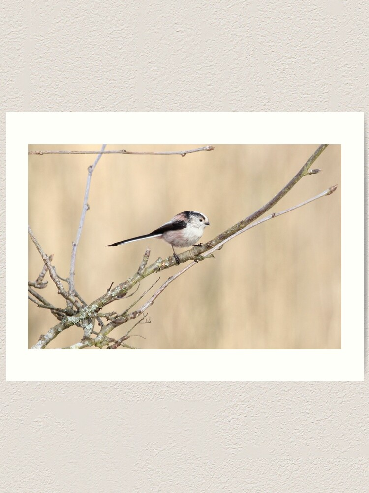 Alternate view of Long tailed tit Art Print