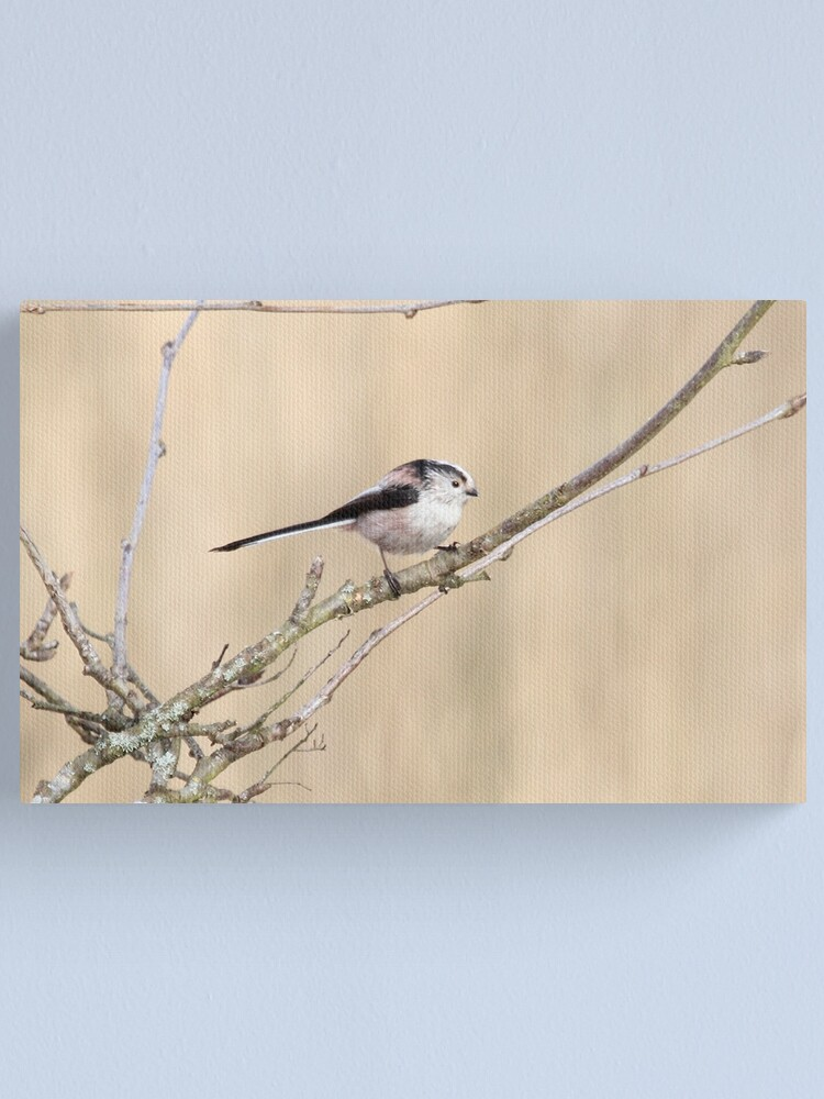 Alternate view of Long tailed tit Canvas Print