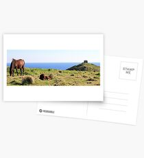 Horses Where Horses Should Be Postcards