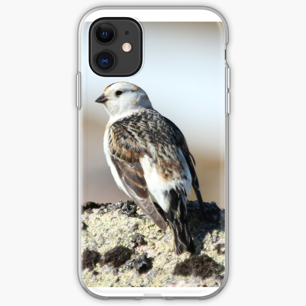 Snow bunting iPhone Case & Cover