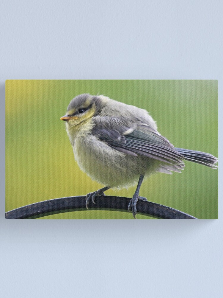 Alternate view of Young blue tit Canvas Print